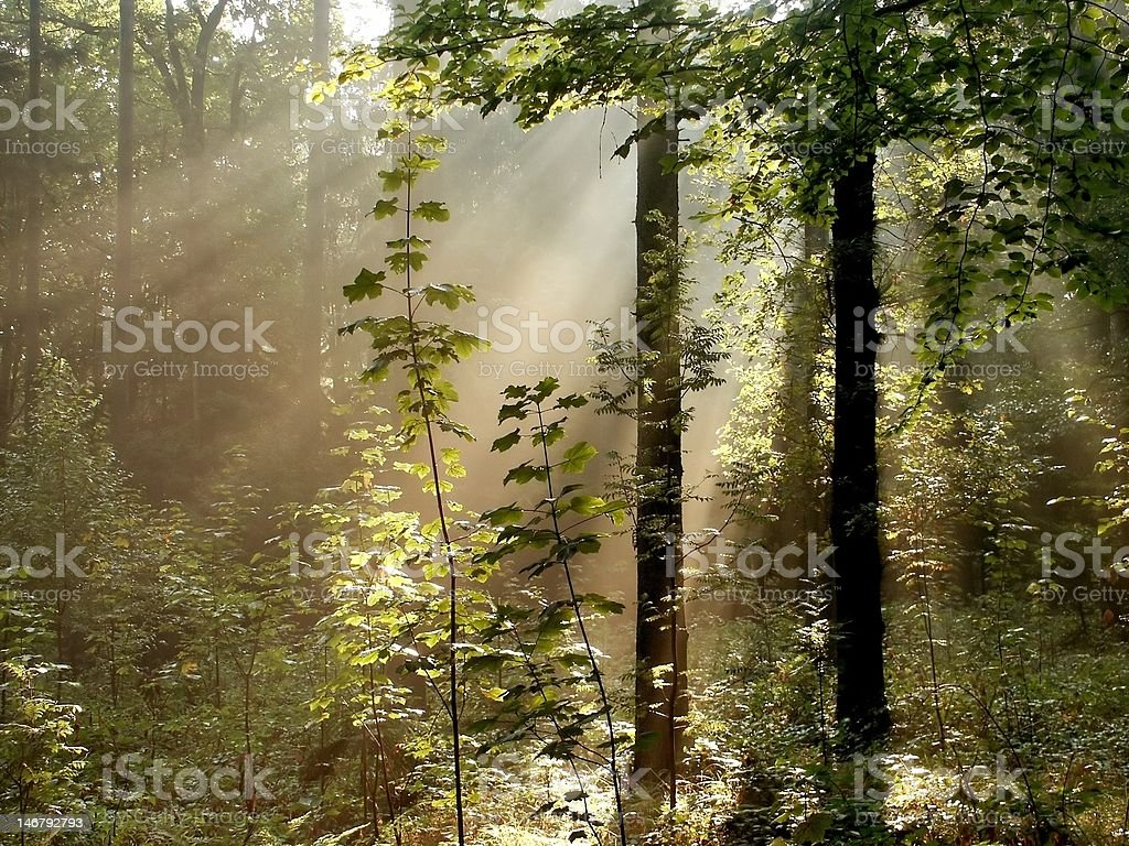 Magical autumn forest at dawn royalty-free stock photo