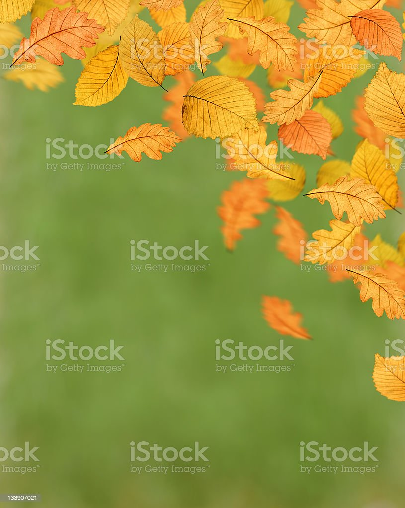 Magical Colours Of Autumn (XL) royalty-free stock photo