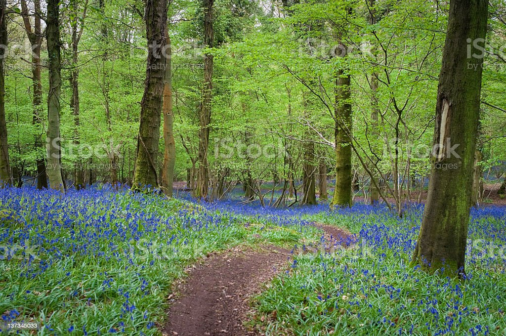 Magical forest and wild flowers royalty-free stock photo