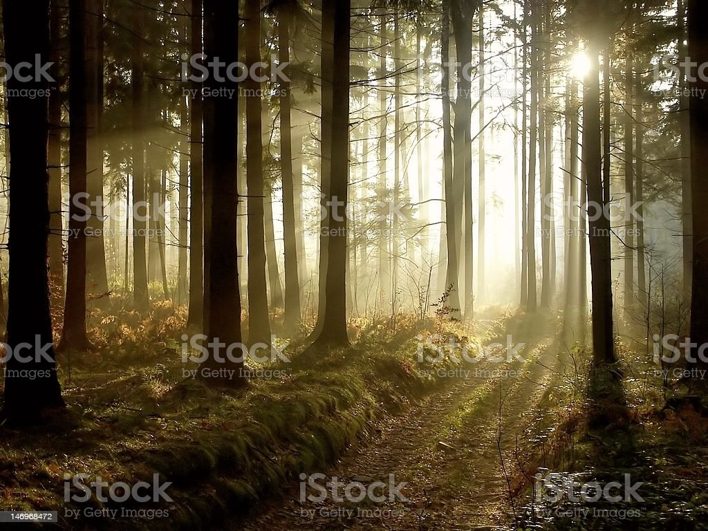 Magical forest at dusk stock photo