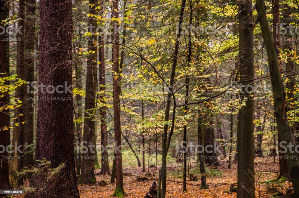 magical forest in autumn stock photo