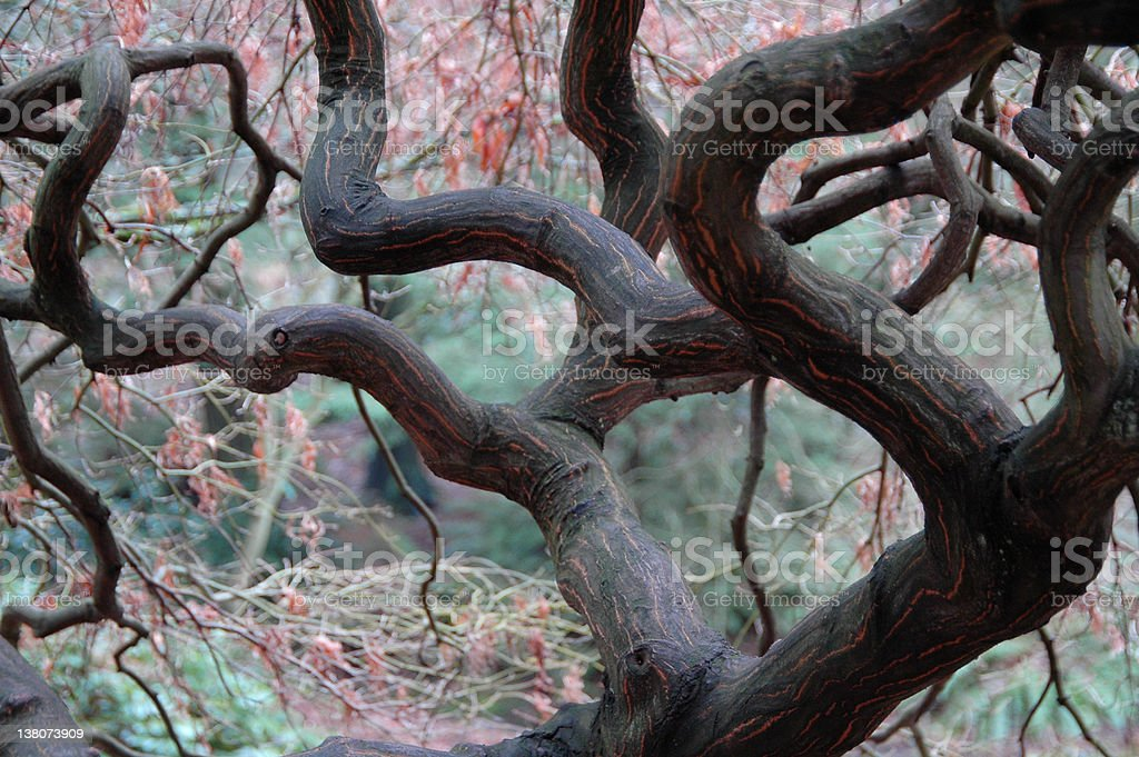 Magical Forest royalty-free stock photo