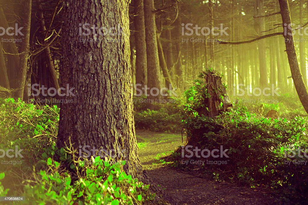 magical forest trail with golden lit trees and green leafs royalty-free stock photo