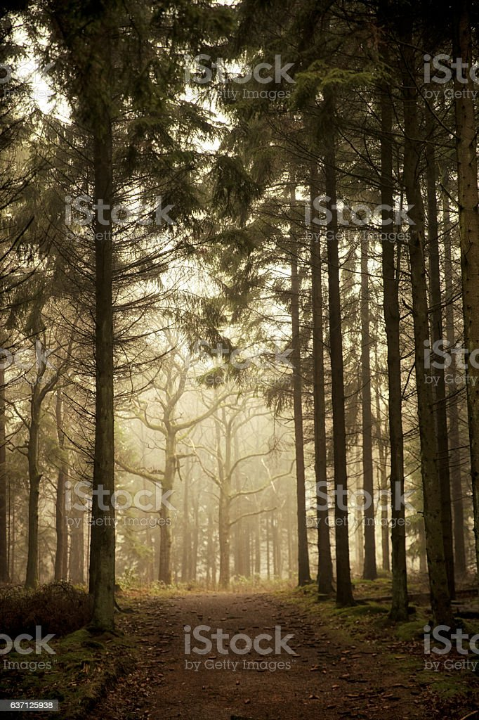 Magical Forest Walk stock photo