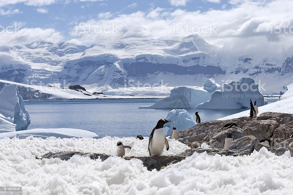 magical home of penguins stock photo