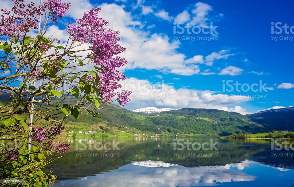 Magical landscape of Norway in May stock photo