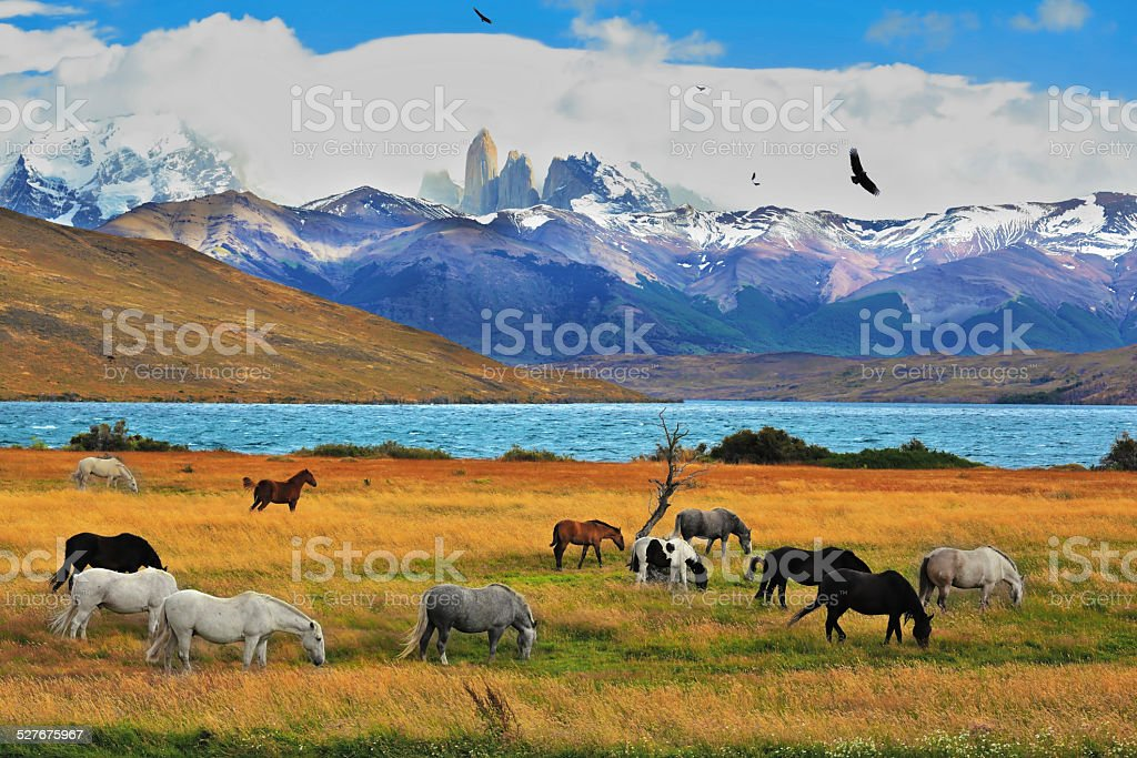 Magical landscape stock photo