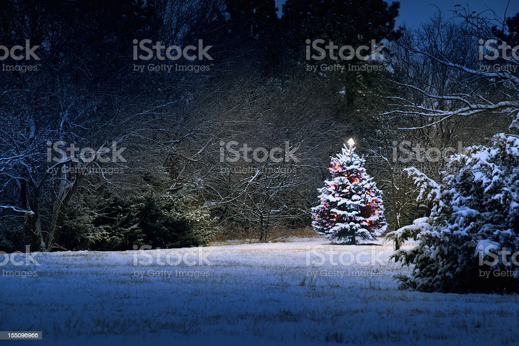 Magical Light Illuminates Snow Covered Christmas Tree stock photo