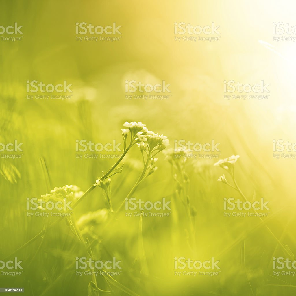 Magical meadow royalty-free stock photo