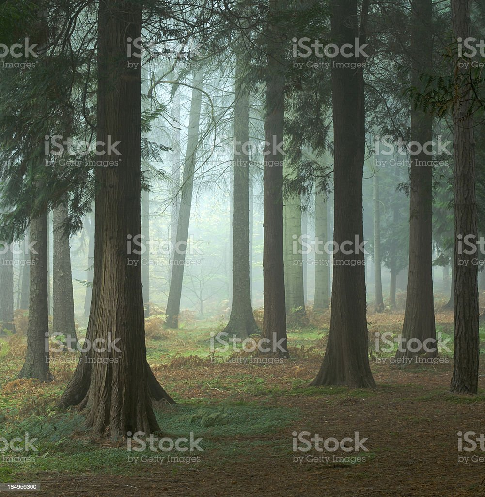 magical misty forest royalty-free stock photo