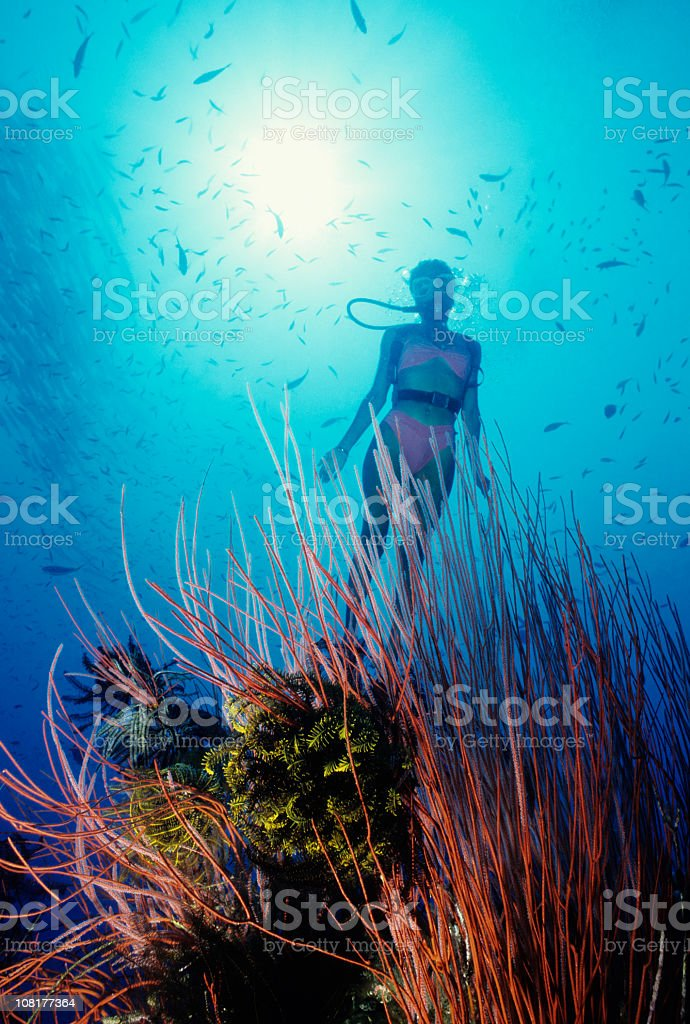 Magical Reef stock photo