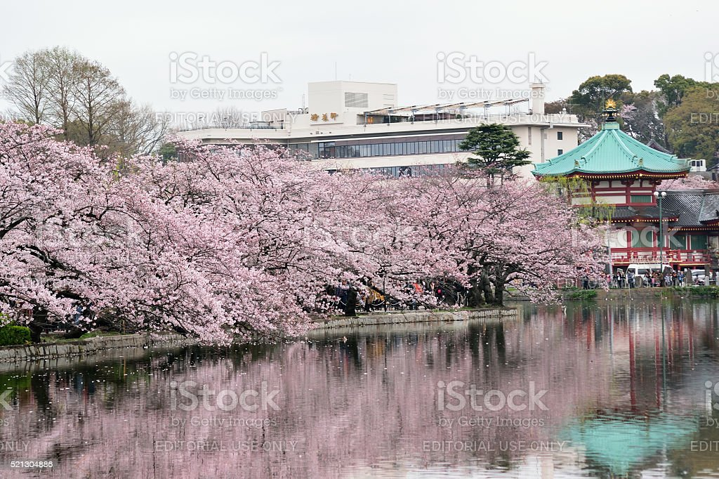 Magical Spring Landscape in Tokyo, Japan stock photo