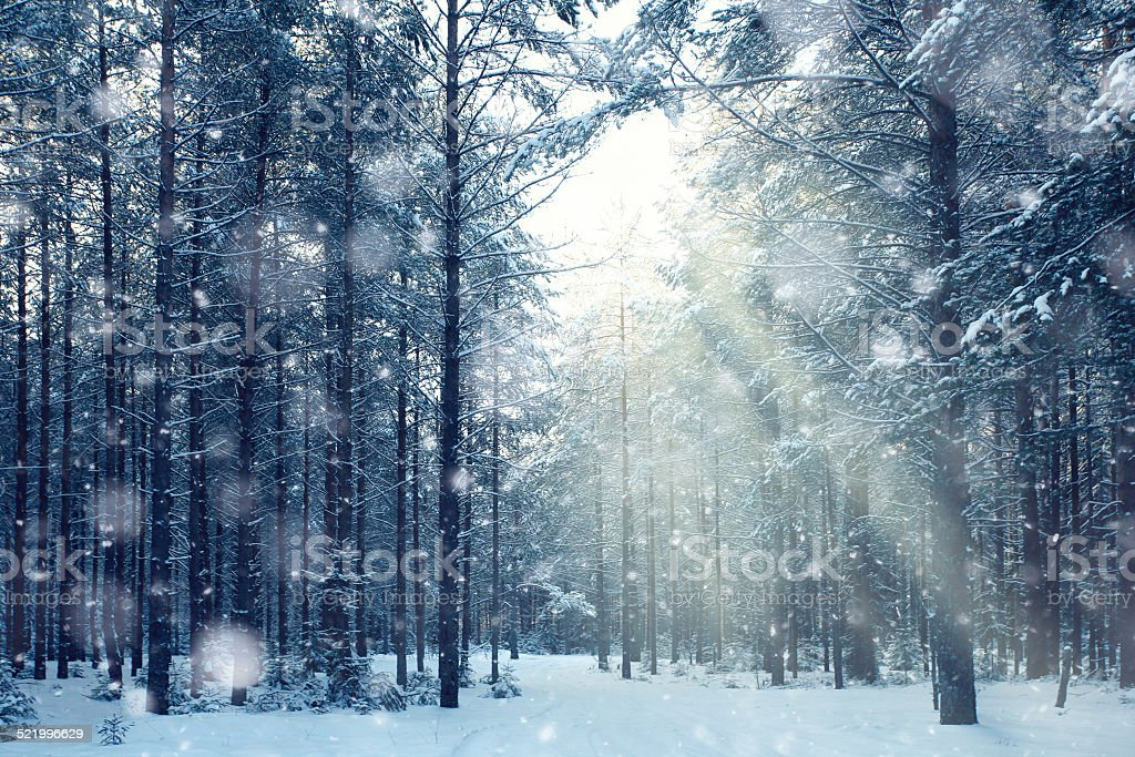 magical winter forest, a fairy tale, mystery stock photo