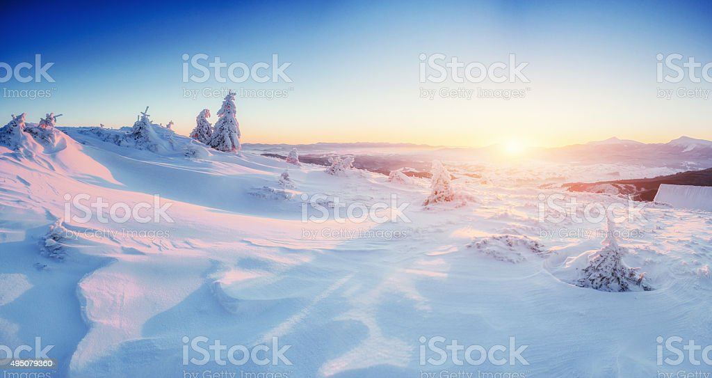 magical winter snow covered tree stock photo