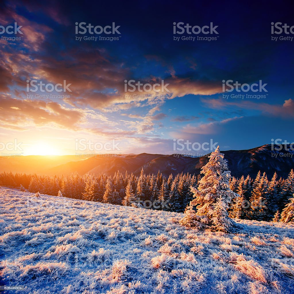 magical winter snow covered tree. Sunset in the Carpathians. stock photo