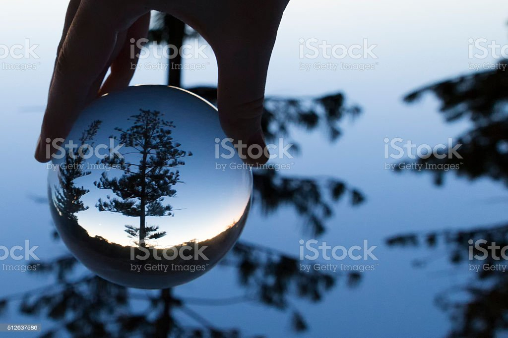 Magnification of a Pine Tree! stock photo