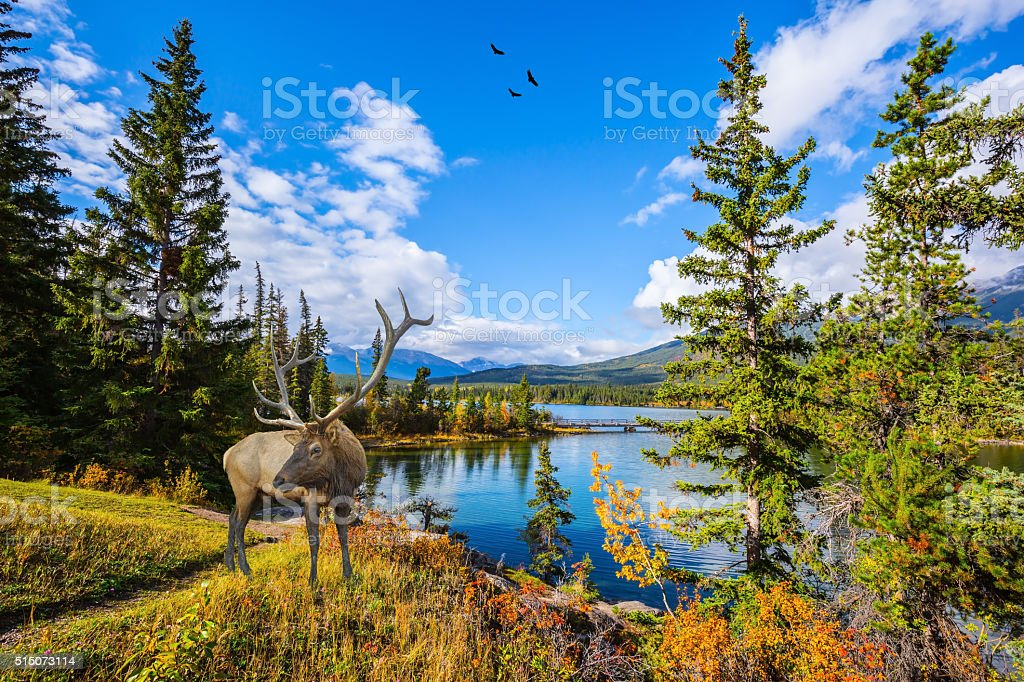 Magnificent deer with branchy horns stock photo