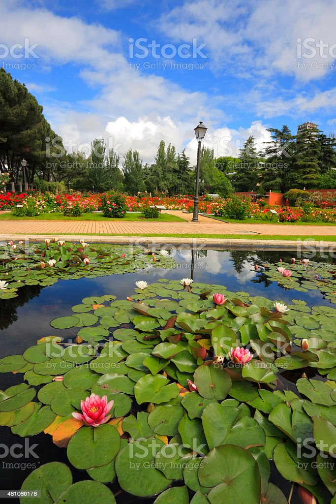 Magnificent garden of roses and lilies in spring Madrid stock photo