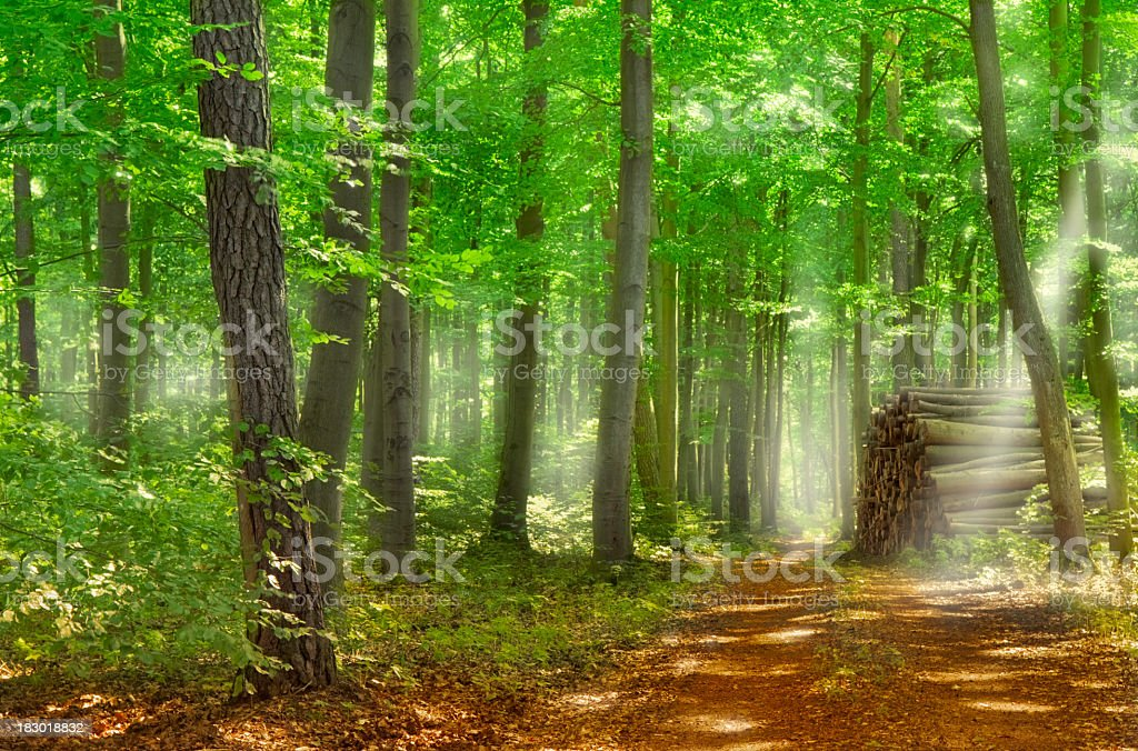 Magnificent mood of a pathway in the woods with sunlight royalty-free stock photo