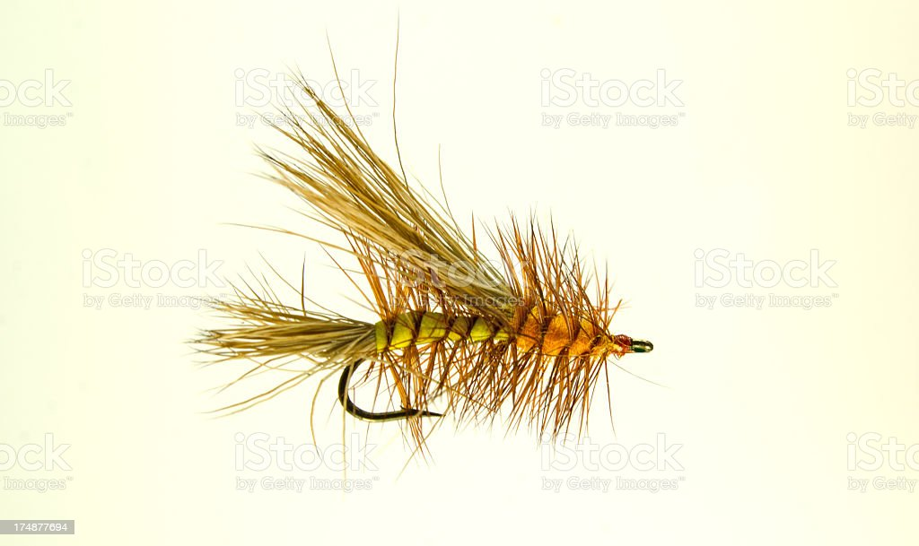 Magnified Dry Fly royalty-free stock photo