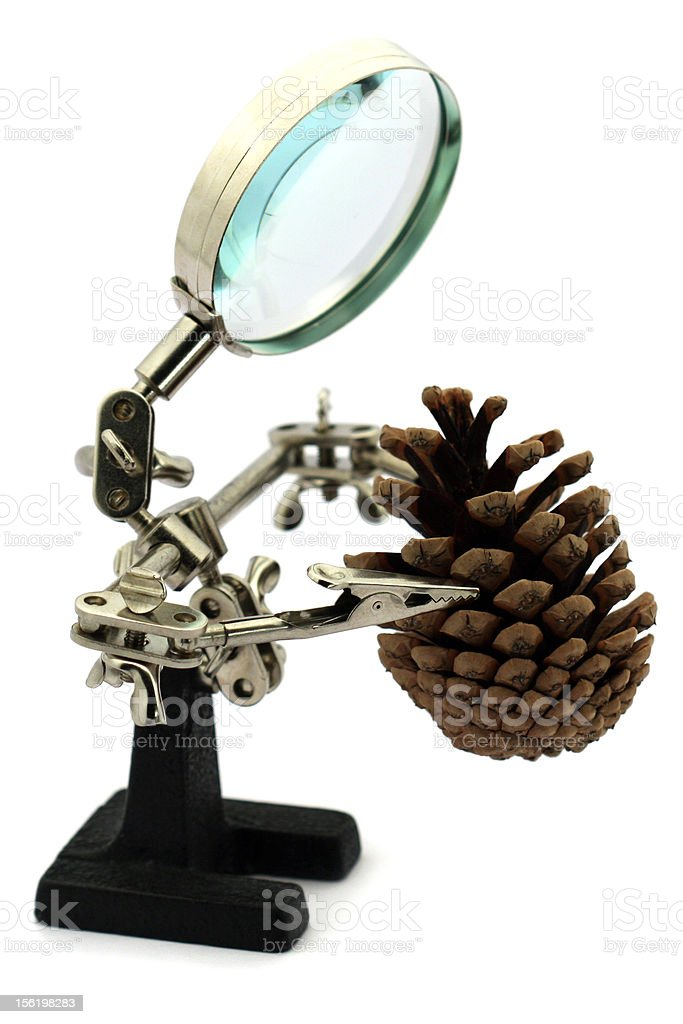 Magnifier man with pine cone royalty-free stock photo