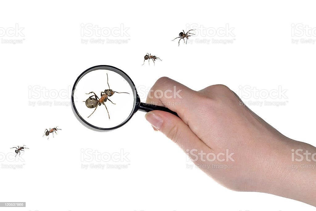 magnifying in hand and ants line stock photo