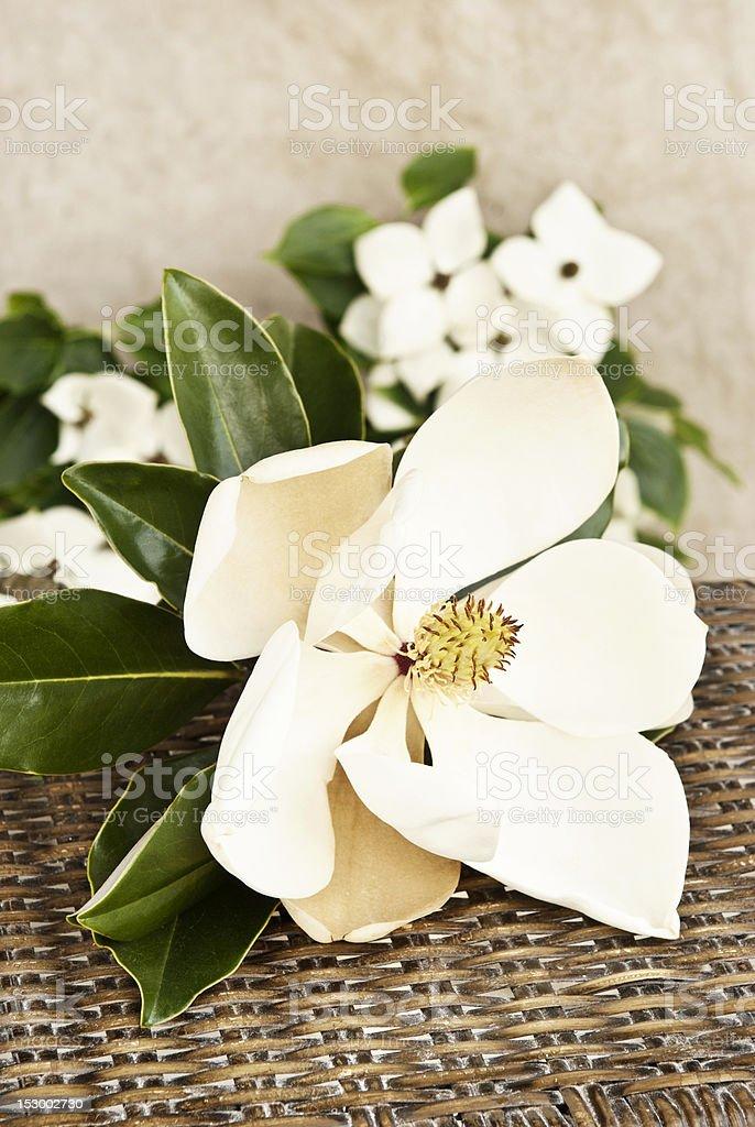 Magnolia and Dogwood royalty-free stock photo