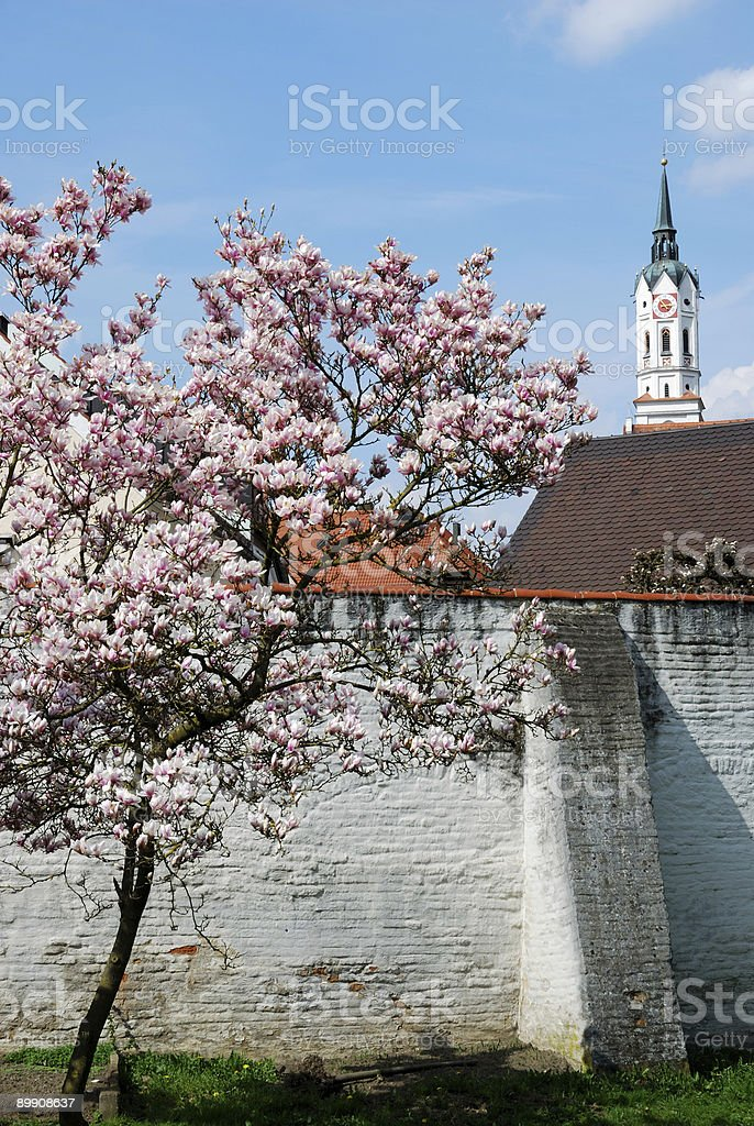 Magnolia at spring royalty-free stock photo