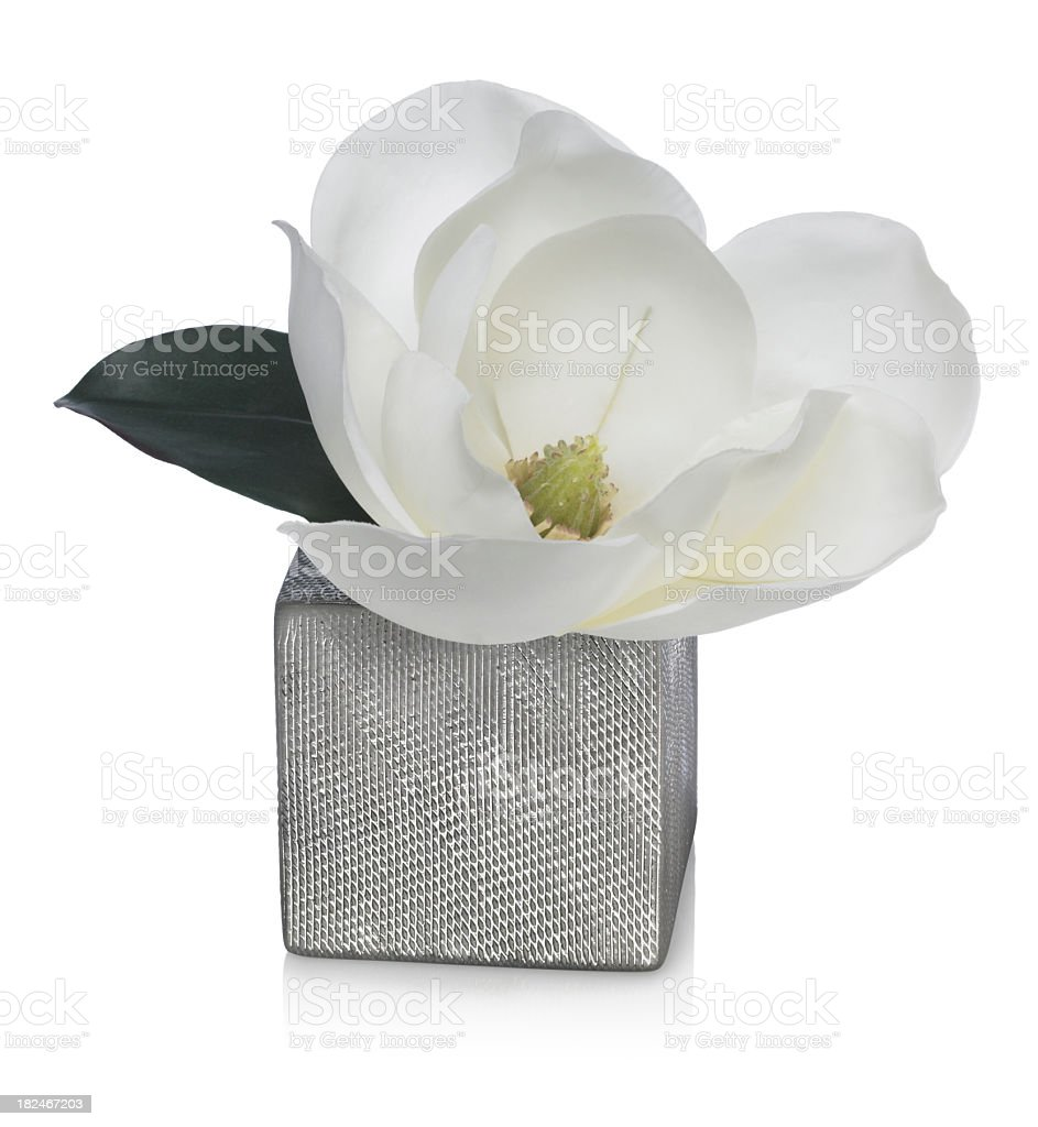 Magnolia Blossom in Silver Vase  on a white background stock photo
