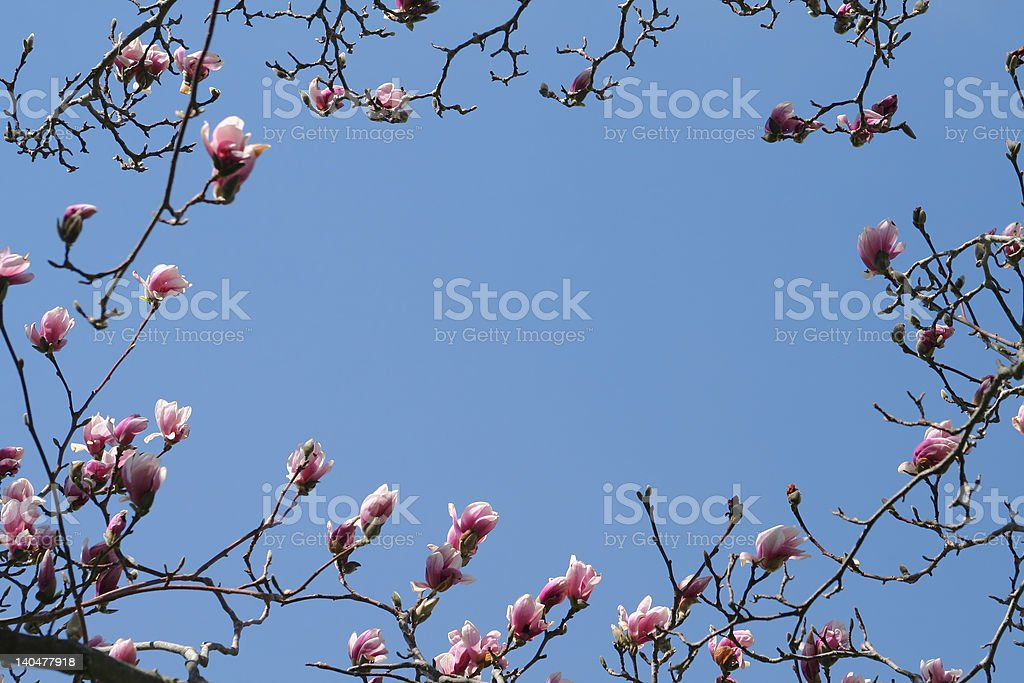 Magnolia  Frame royalty-free stock photo