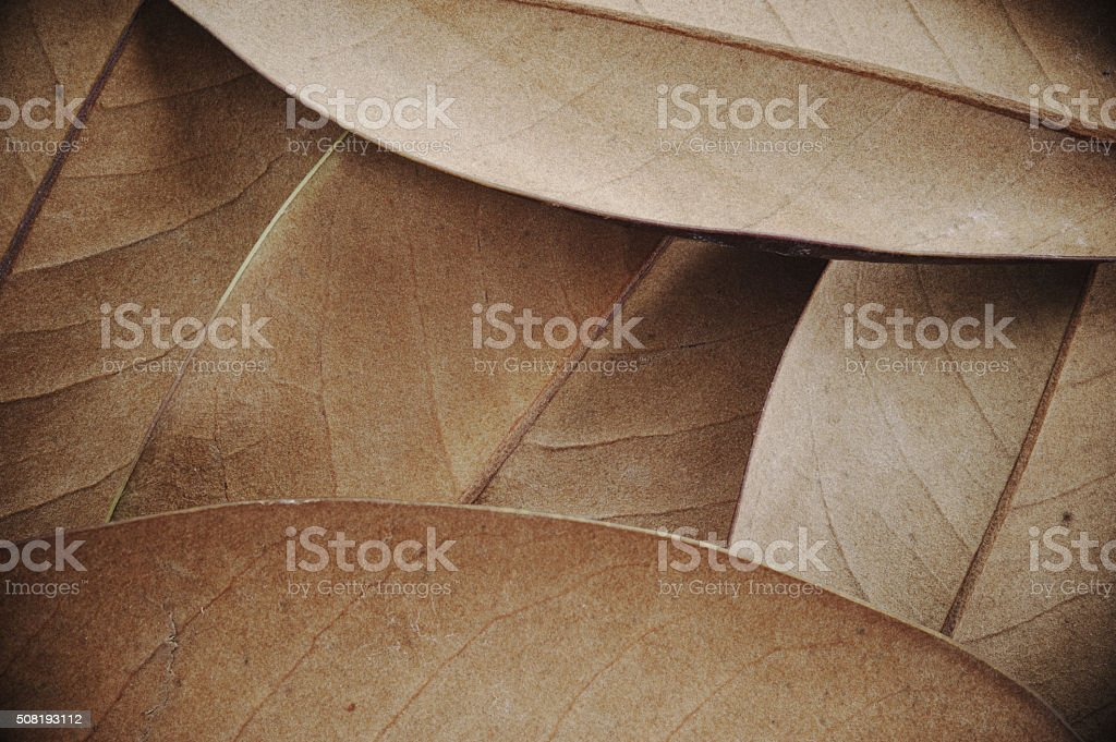 Magnolia leaves stock photo