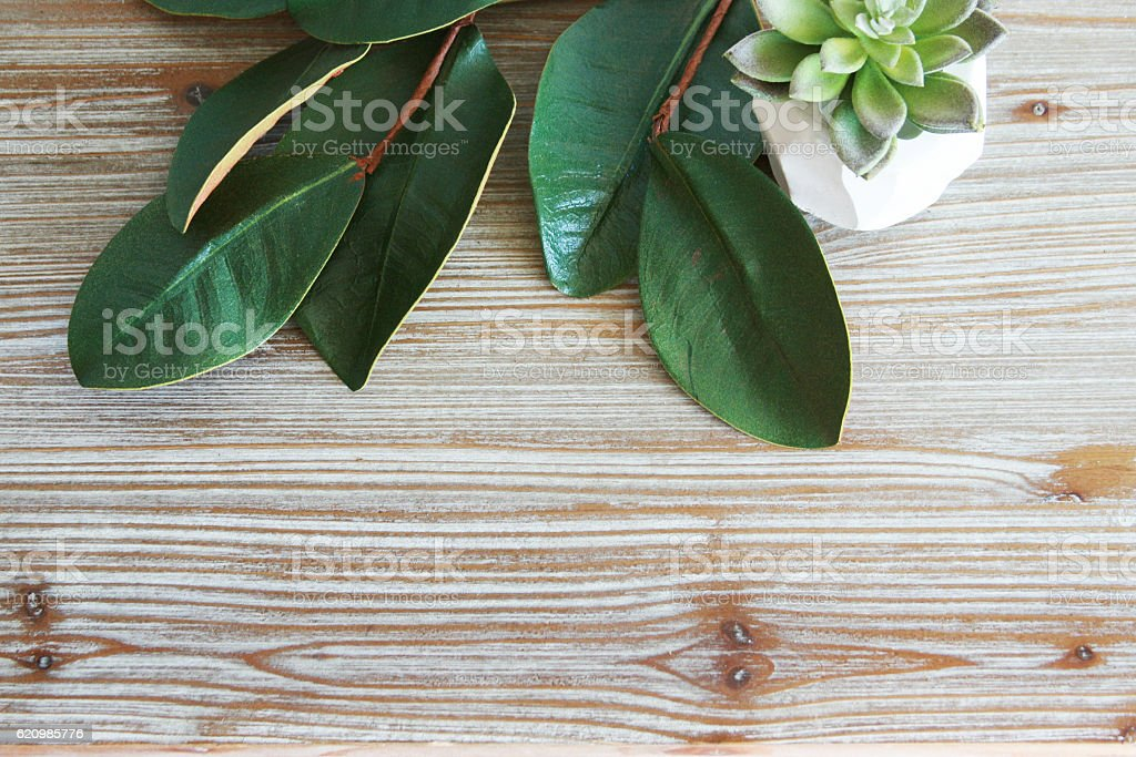 Magnolia Leaves Wood Grain Background stock photo