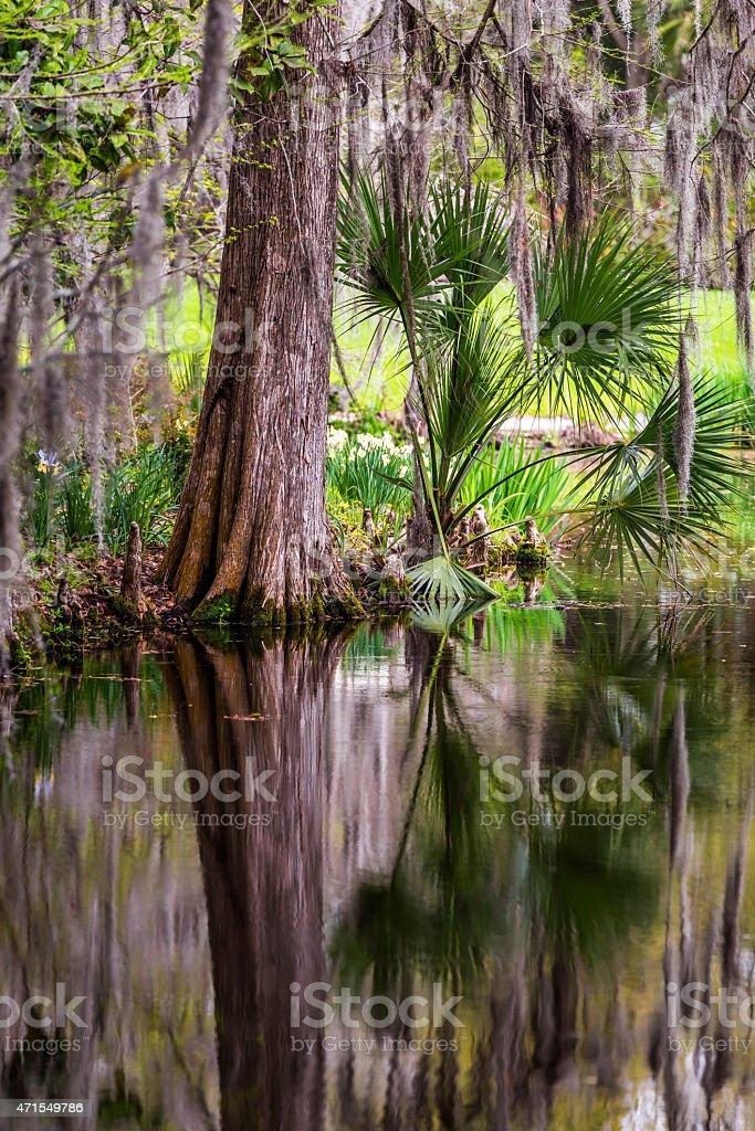 Magnolia Plantation Swamp Garden stock photo