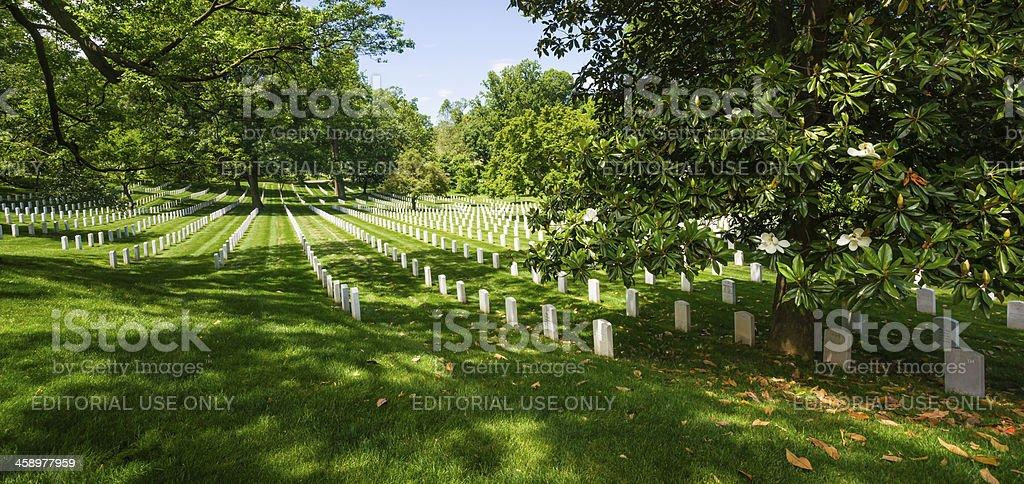 Magnolia Tree and Tombstones at Arlington National Cemetery, Virginia, USA royalty-free stock photo