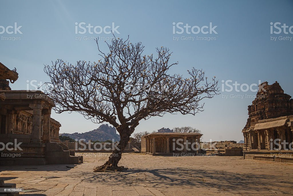 Magnolia tree in Hampi, Karnataka, India stock photo