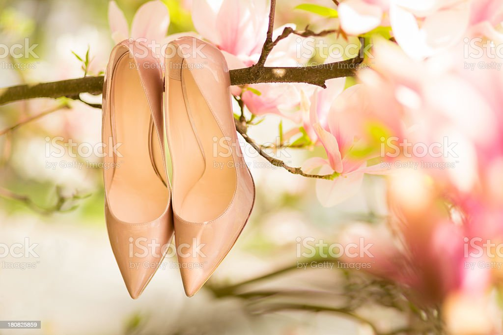 Magnolia tree with wedding shoes royalty-free stock photo