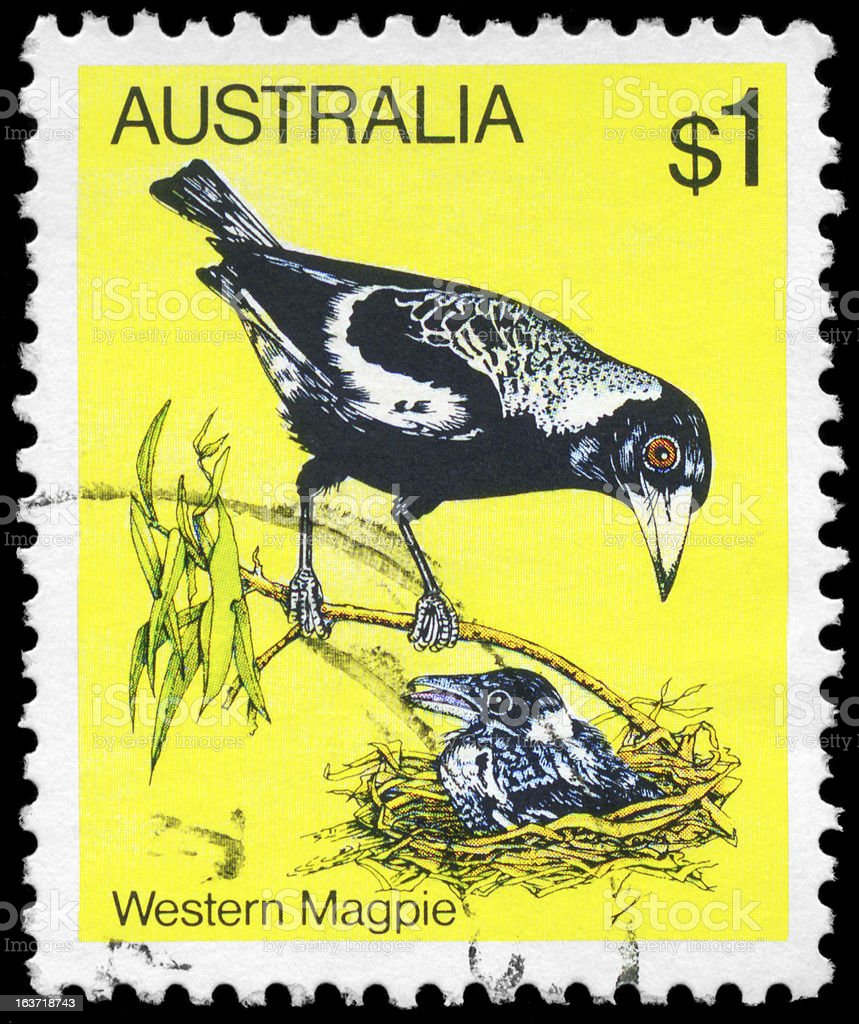 Magpie royalty-free stock photo