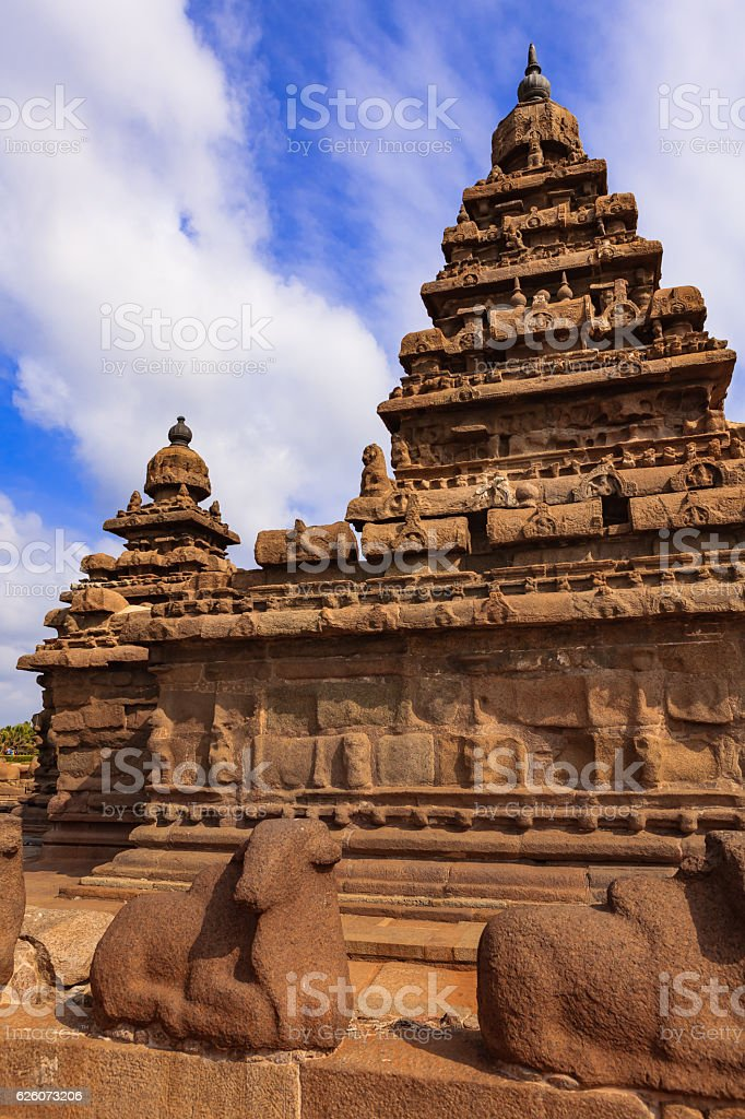 Mahabalipuram, India - 8th Century Shore Temple and Granite Cows stock photo