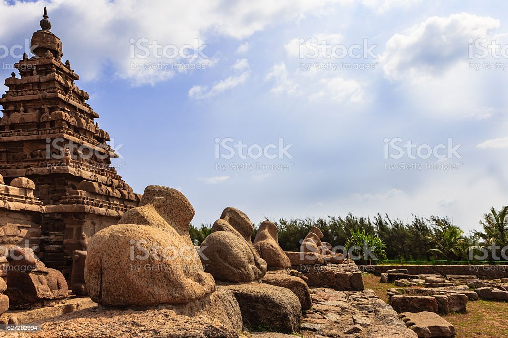 Mahabalipuram, India - 8th Century Shore Temple and Granite Cows stock photo