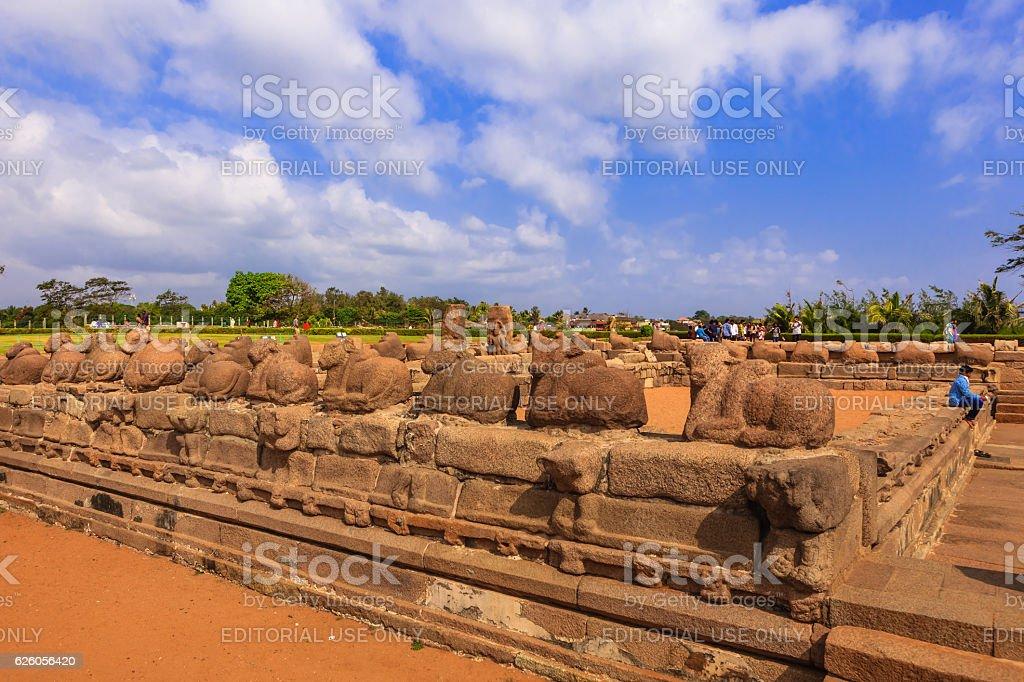 Mahabalipuram, India: Sculpted Stone Cattle and Tourists near Shore Temple stock photo