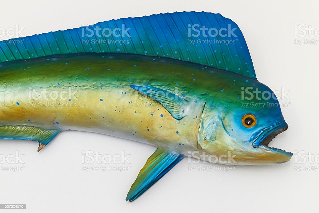 Mahi-Mahi stock photo