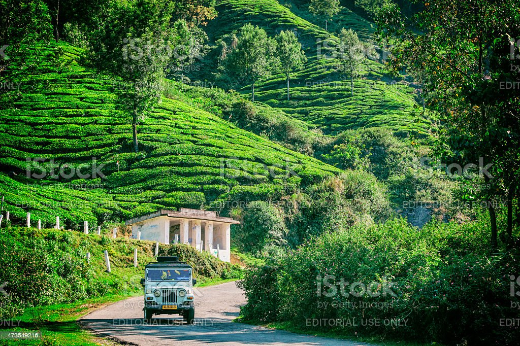 Mahindra Driving Through Tea Plantations in Munnar, India stock photo
