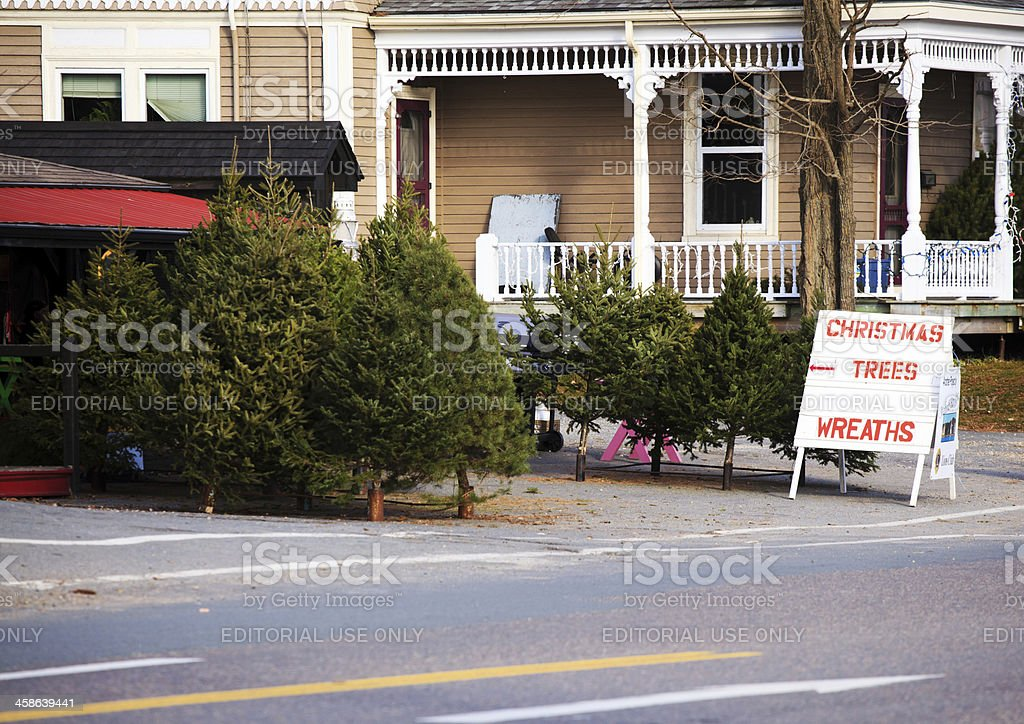 Mahone Bay Christmas Tree lot stock photo