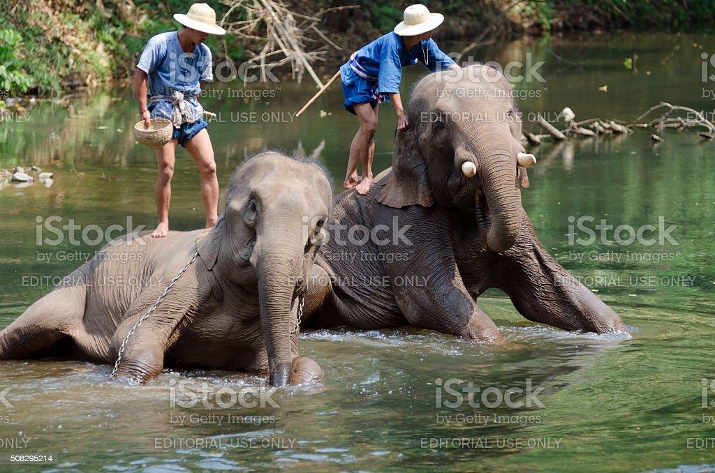 Mahoots and Elephants stock photo