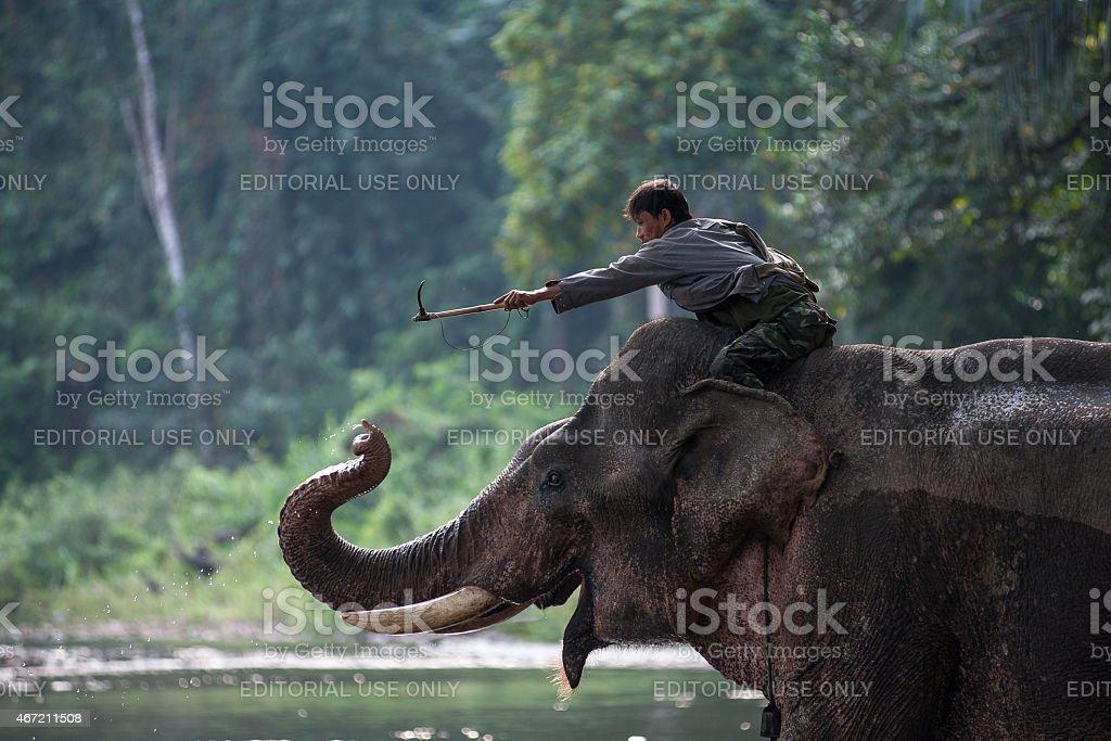 Un cornac jouant avec son éléphant améliorer son short. photo libre de droits