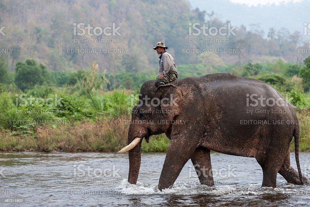 Un cornac équitation éléphants dans la rivière. photo libre de droits