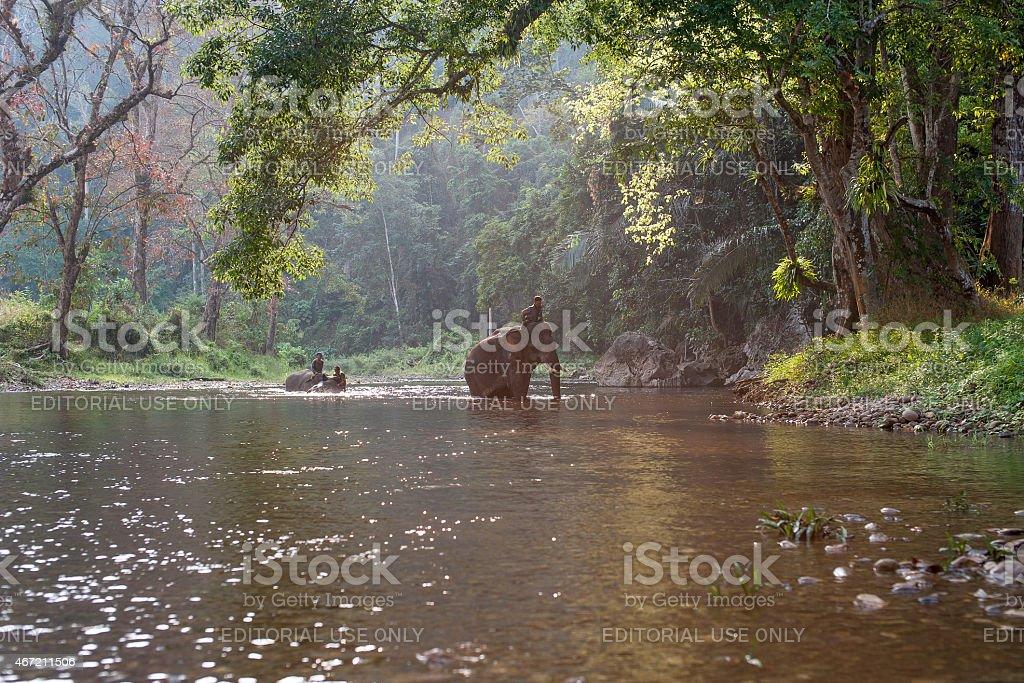Des cornacs équitation éléphants traversant le fleuve. photo libre de droits