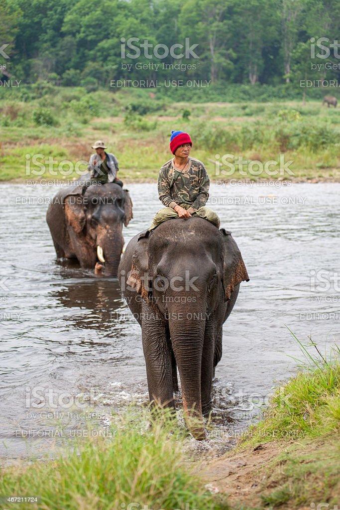Des cornacs équitation éléphants traversant le fleuve photo libre de droits