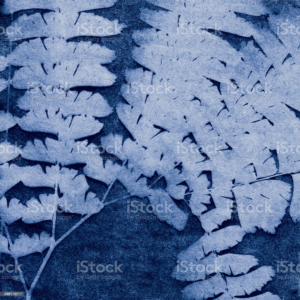 Maidenhair Fern Cyanotype royalty-free stock photo