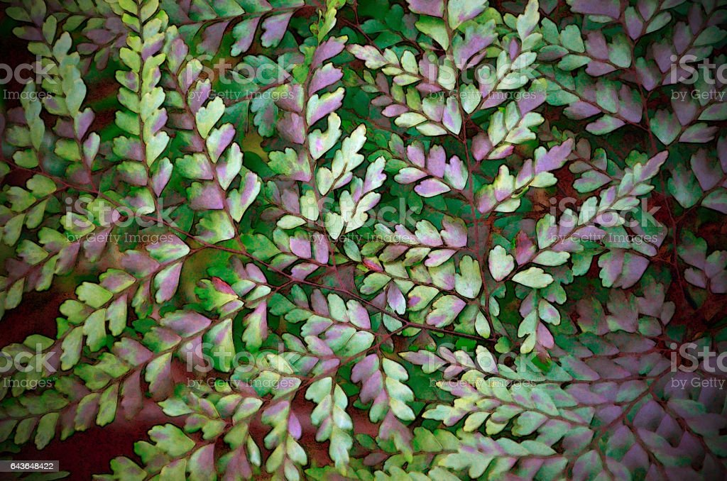 Maidenhair fern foliage background stock photo